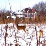 casa hamptons ciervo
