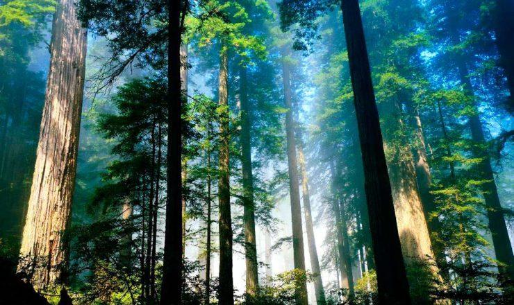 tala controlada y reforestación